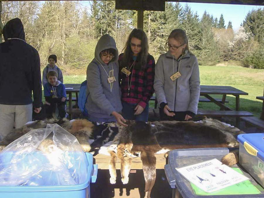 Sixth graders at Trickle Creek Outdoor School learn about animals in the Northwest. High school counselors practiced their teaching skills.
