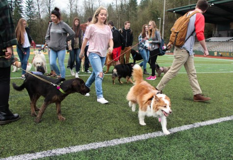Senior Prank: Meet the dogs! (11 Photos)