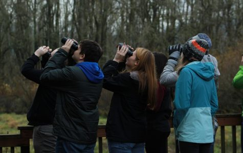 During their third all day field trip to Sauvie Island, students watch a red-breasted sapsucker in a nearby tree.