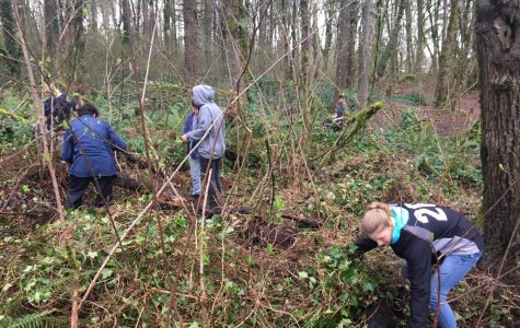 At one of their Saturday ivy pulls, the Ecology Club works in their section of Mary S. Young to clear out invasive species.