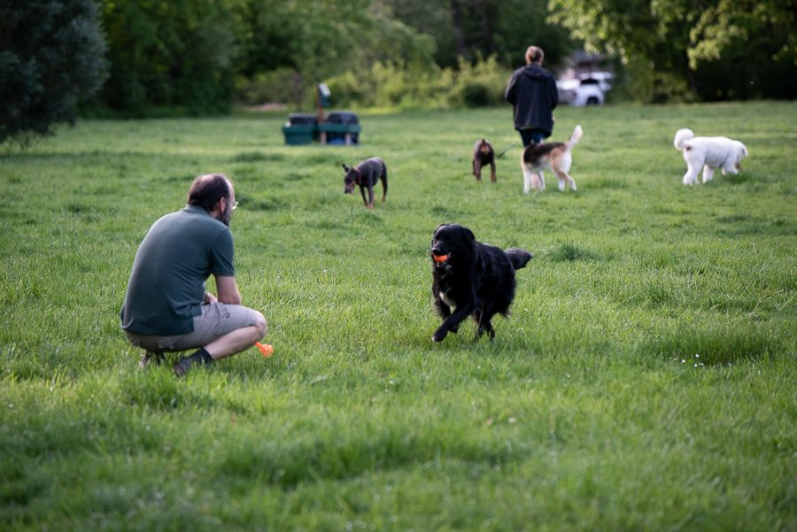 On sunny days, the dog park is one of the more popular destinations. While Mary S. Young strictly enforces leash laws, the designated dog park area allows dogs to run and let out some energy playing ball.