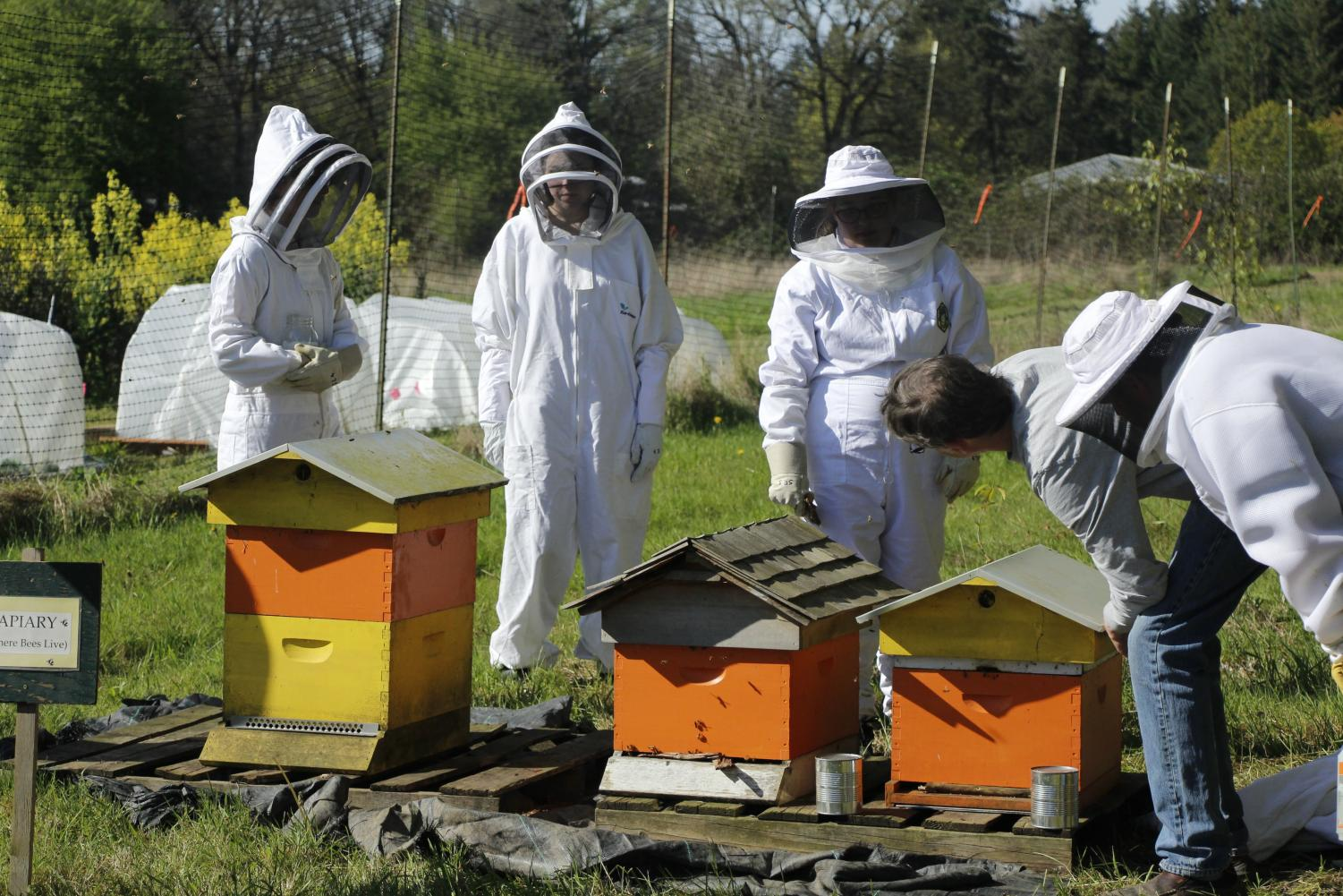Checking the three bee boxes at Crest Farms, senior Andrea Swenson and juniors Sarah Martin and Tahnna Shaaban wait to inspect the hive. Crest Farms in Wilsonville offers a Beekeeping class for students to learn about bees and allowing them to work directly with nature.