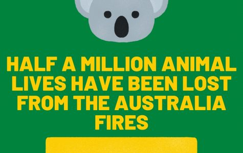 Animals in Australia are suffering large amounts because of the devastating bushfires.