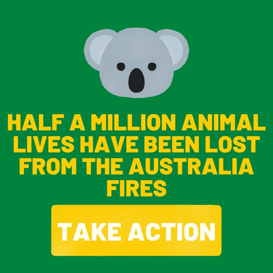 Animals+in+Australia+are+suffering+large+amounts+because+of+the+devastating+bushfires.